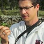 Bolsista Vítor de Carvalho Rocha observa um exemplar da Hypsiboas prasinus