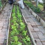 Manejo da horta 17 07 16_estudantes da educampo