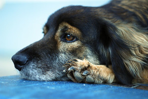 Foto: www.flickr.com/rafaelvilela