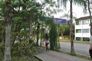 Árvores caídas foram retiradas. Foto: Caetano Machado/Agecom/UFSC