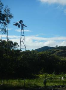 Catavento retorcido na Fazenda Experimental da Ressacada. Foto: Divulgação