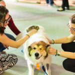 Cães Sem Diploma - Foto Henrique Almeida-10