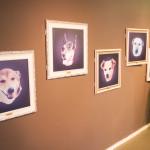 Cães Sem Diploma - Foto Henrique Almeida-13