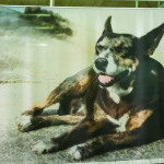 Cães Sem Diploma - Foto Henrique Almeida-14