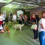 Cães Sem Diploma - Foto Henrique Almeida