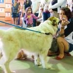 Cães Sem Diploma - Foto Henrique Almeida-3