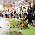Cães Sem Diploma - Foto Henrique Almeida-4