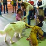 Cães Sem Diploma - Foto Henrique Almeida-6