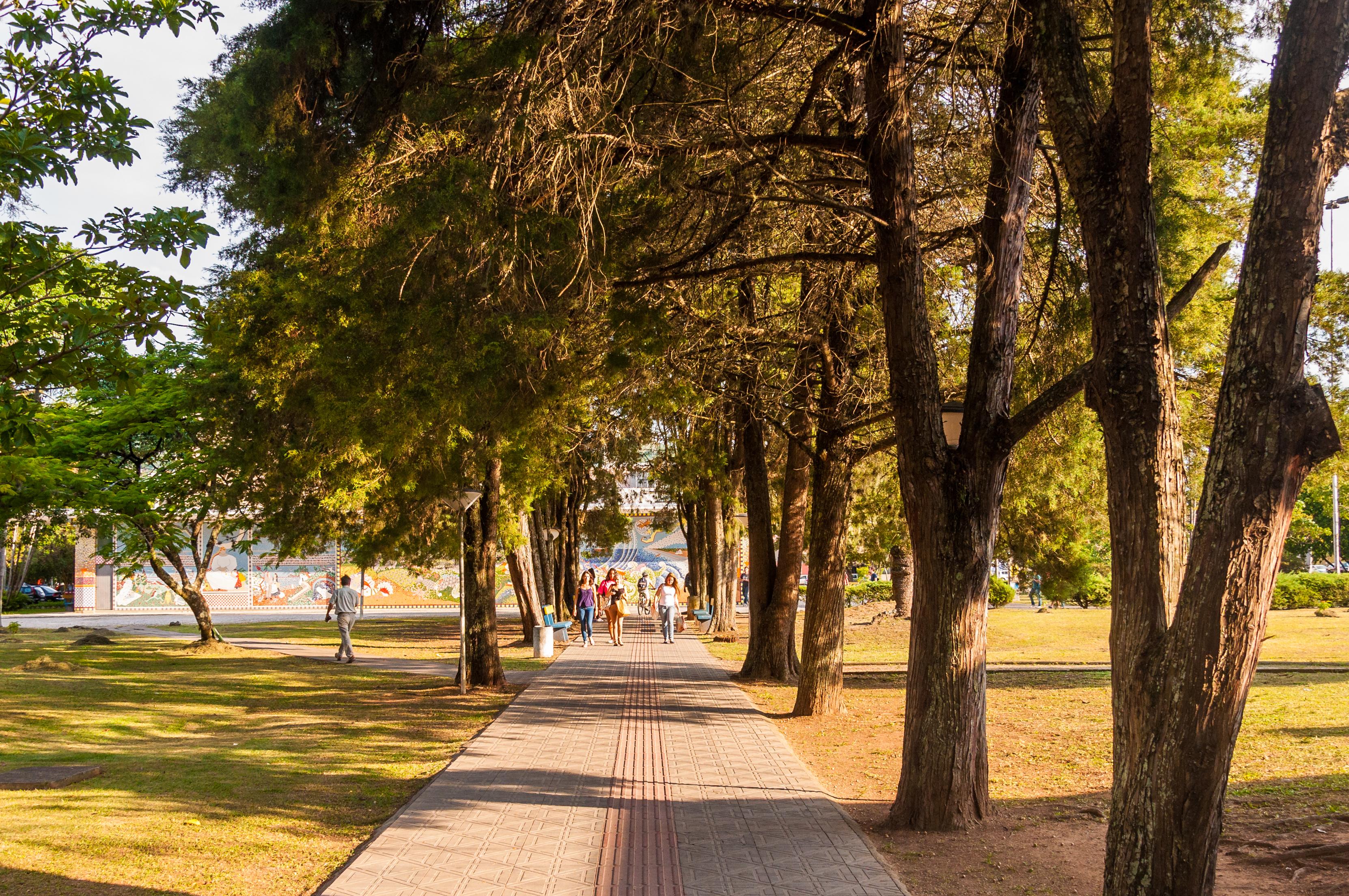Caminho para a Biblioteca Central